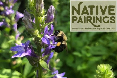 Native Pairings: Plant for the Queens