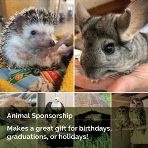 Animal Sponsorship