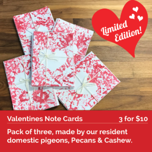 Note Cards by Pecans and Cashew